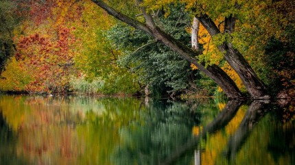 AutumnReflection
